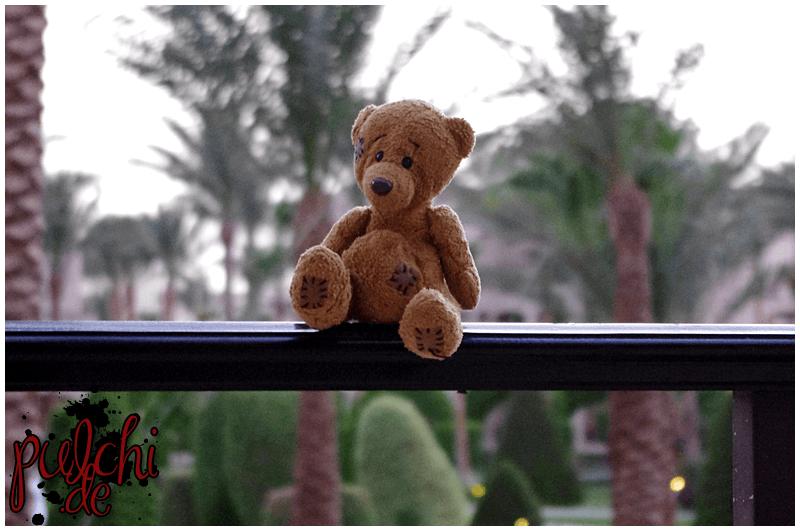 Teddy genießt den Urlaub